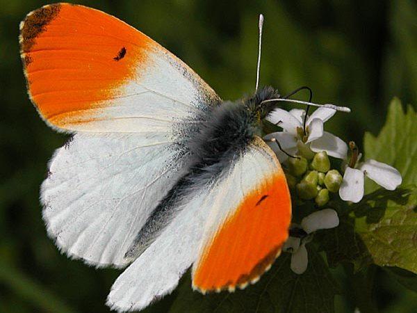 Naturospace Honfleur